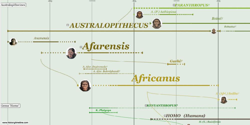 Hominid Evolution, Australopithecus family