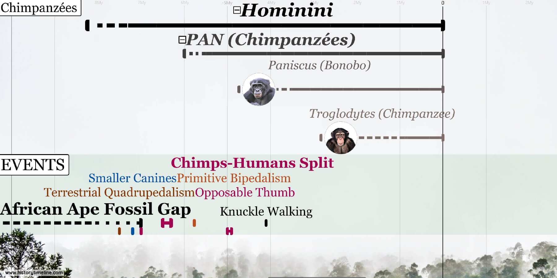 Evolution of Chimps