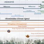 3Detail_Primate_Evolution